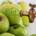 Cura de slăbire cu oţet de mere – eficientă sau mit?